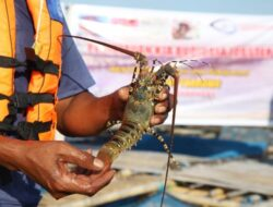 Kabupaten Biak Numfor Ekspor Perdana Komoditas Perikanan ke Singapura